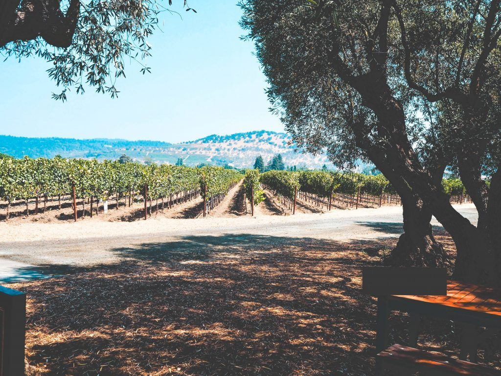 Things to do in Napa | CJE