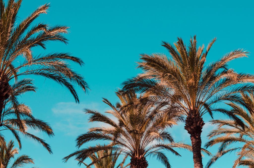 Things to do in California with CJE